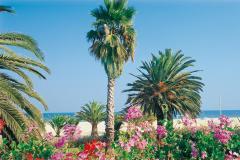 riviera-delle-palme-8